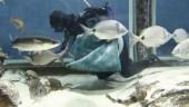vista previa del artículo Variedad de especies en el Museo del Mar
